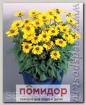 Рудбекия хирта Тото Голд, 250 шт. Профессиональная упаковка