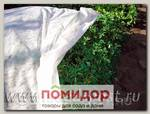 Укрывной материал Агротекс 30 (для укрытия растений) 1,6х10 м