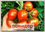 Томат Крымский черный Голицина, 5 шт.