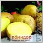 Севок картофеля Триумф, 500 г