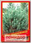Сосна Обыкновенная «Glauca», 5 шт.