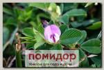 Куммеровия Прилистниковая, 10 шт.