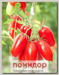 Томат Гусарский F1 Элит мини, 10 шт. Профессиональная упаковка