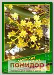 Лаурелия Вечнозеленая, 0,1 г (20 шт.)