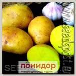 Севок картофеля Велина, 500 г