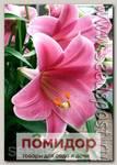 Лилия длинноцветковая PINK HEAVEN, 2 шт.