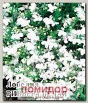 Лобелия Ривьера Белая, 250 шт. Профессиональная упаковка
