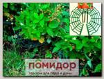 Опоры для клубники Корзинка, 10 шт.