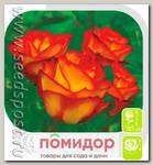 Роза Флорибунда ТУТТИ ФРУТТИ, 1 шт.