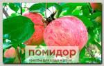Яблоня обыкновенная КОРИЧНОЕ ПОЛОСАТОЕ, 1 шт.