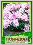 Рододендрон (Rhododendron ririeri), 0,02 г (40 шт.)
