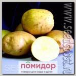 Севок картофеля Илона, 500 г