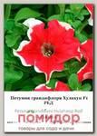 Петуния грандифлора Хулахуп Ред F1, 100 др. СЕМКОМ ПРОФИ Sakata