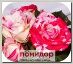 Роза Спрей ПИНК ФЛЕШ, 1 шт. NEW