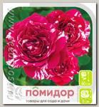 Роза Спрей ПАПЛ ТАЙДЖЕР, 1 шт.