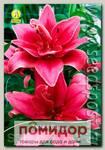 Лилия азиатская махровая CERES, 2 шт.