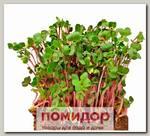 Микрозелень Редис листовой Чайна Роуз, 5 г