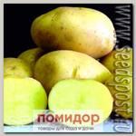 Севок картофеля Баллада, 500 г