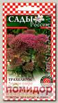 Трахелиум Лесное озеро Розовый, 10 шт.