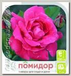 Роза парковая АЛЕКСАНДР МАККЕНЗИ, 1 шт.