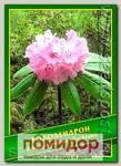 Рододендрон (Rhododendron glischrum), 0,02 г (40 шт.)