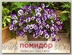 Виола ампельная Вондерфол Блю Пикоти Шейдес, 100 шт. Профессиональная упаковка