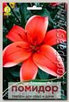 Лилия азиатская ELECTRIC RED, 2 шт.