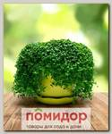 Мята стелющаяся Мини Минт, 6 шт.