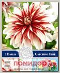 Георгин декоративный CATCHING FIRE, 2 шт. NEW