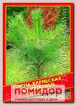 Сосна Карибская «Hondurensis», 3 шт.