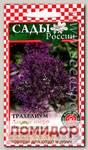 Трахелиум Лесное озеро Фиолетовый, 10 шт.