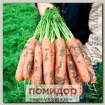 Морковь Балтимор F1, 4550 шт. Профессиональная упаковка