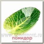 Салатник Walmer Colourful Leaf Lettuce, 13х23 см
