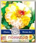 Георгин помпонный DOUBLE JILL, 2 шт. NEW