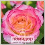 Роза Премиум ФРУКТОВЫЙ ЛИКЕР, 1 шт. NEW