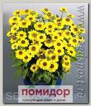 Рудбекия хирта Тото Лемон, 250 шт. Профессиональная упаковка