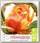 Роза чайно-гибридная ФИЕСТА, 1 шт.