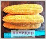 Кукуруза сахарная Ноа F1, 15 шт.