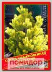 Сосна Обыкновенная «Gold Coin», 5 шт.