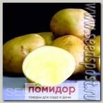 Севок картофеля Ассоль, 500 г