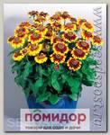 Рудбекия хирта Тото Рустик, 250 шт. Профессиональная упаковка