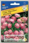 Скабиоза японская Бриллиант Розовая, 8 шт. Немецкая линия