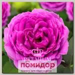 Роза Премиум НАЙТ СИТИ, 1 шт. NEW