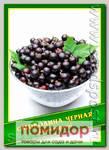 Смородина Черная, 0,1 г (45 шт.)