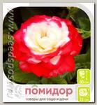 Роза Флорибунда ПРИНЦ МОНАКО, 1 шт.