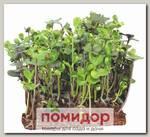 Микрозелень Капуста листовая Кале, Смесь, 2 г