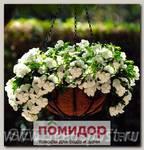 Катарантус ампельный Медитерранеан Вайт, 100 шт. Профессиональная упаковка