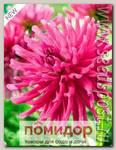 Георгин бордюрный кактусовый IMPERIAL PALACE, 1 шт.