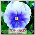 Виола крупноцветковая Дельта Пьюр Лайт Блю, 100 шт. Профессиональная упаковка
