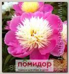 Пион травянистый BOWL OF BEAUTY, 1 шт.